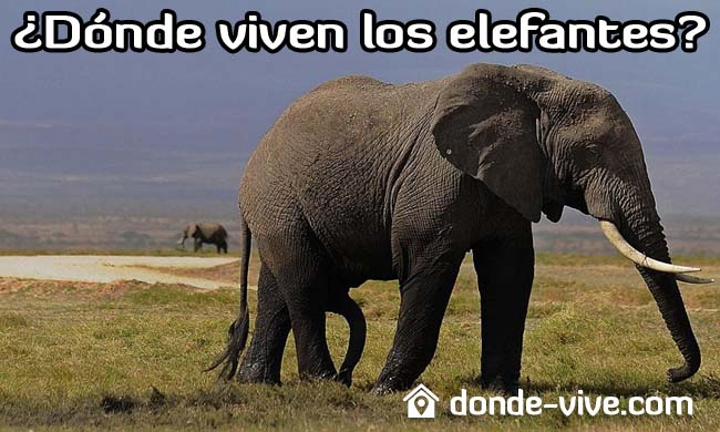Dónde viven los elefantes