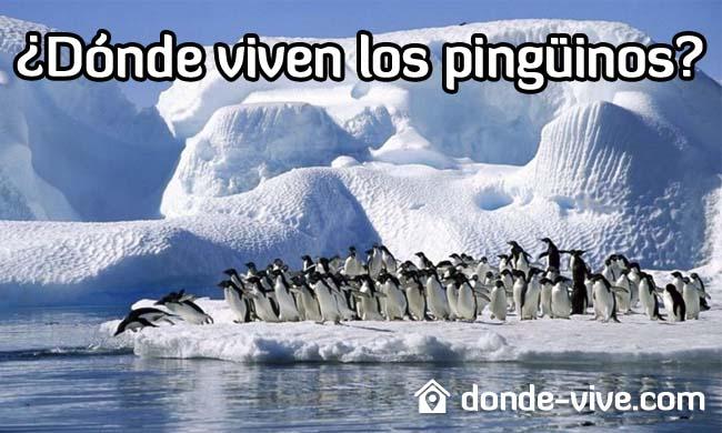 ¿Dónde viven los pingüinos?