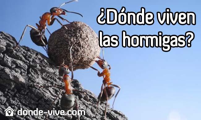 ¿Dónde viven las hormigas?