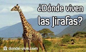 Dónde viven las jirafas