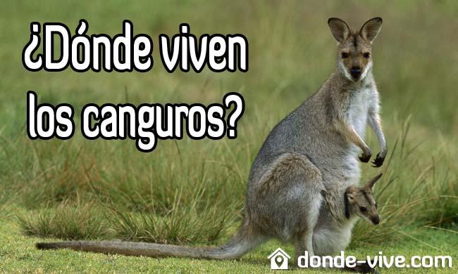 Dónde viven los canguros
