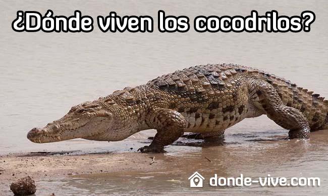 Dónde viven los cocodrilos