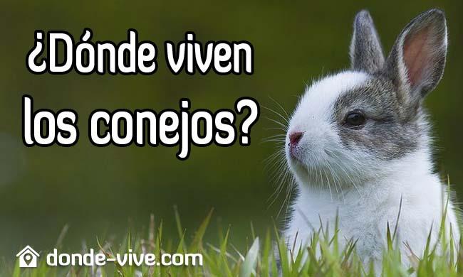 ¿Dónde viven los conejos?