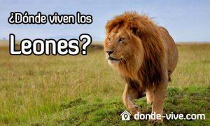 Dónde viven los leones