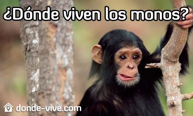 Dónde viven los monos