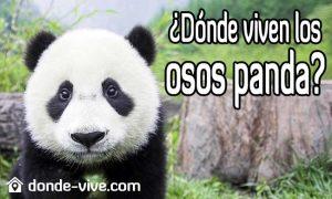 Dónde viven los osos panda