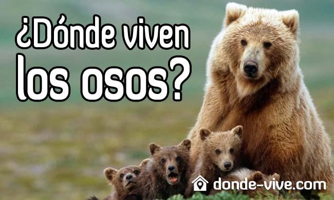 ¿Dónde viven los osos?