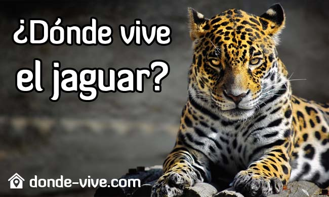 Dónde vive el jaguar
