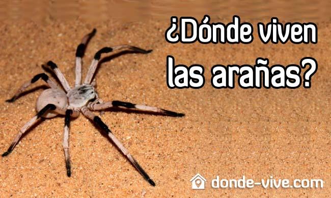 Dónde viven las arañas