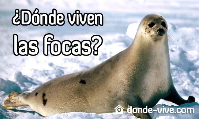 Dónde viven las focas