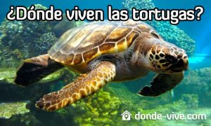 Dónde viven las tortugas