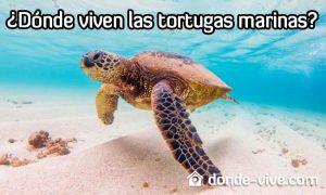 Dónde viven las tortugas marinas