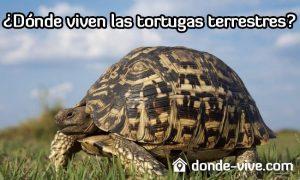 Dónde viven las tortugas terrestres