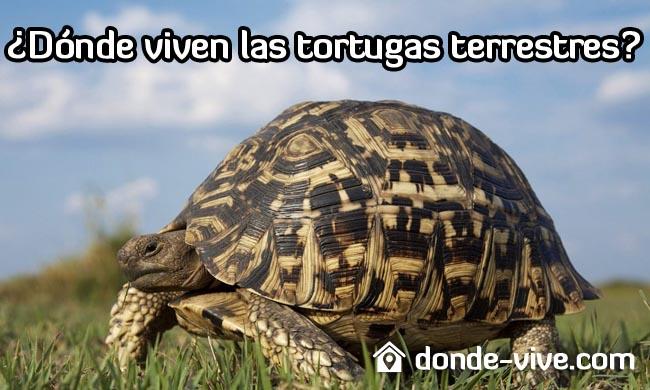 ¿Dónde viven las tortugas terrestres?
