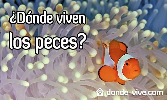 Dónde viven los peces