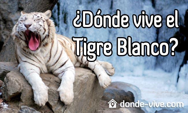 Dónde vive el tigre blanco
