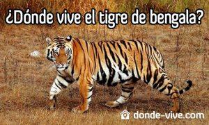 Dónde vive el tigre de bengala