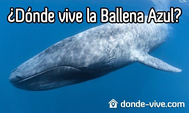 Dónde vive la ballena azul