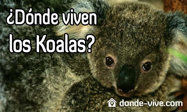 Dónde viven los Koalas