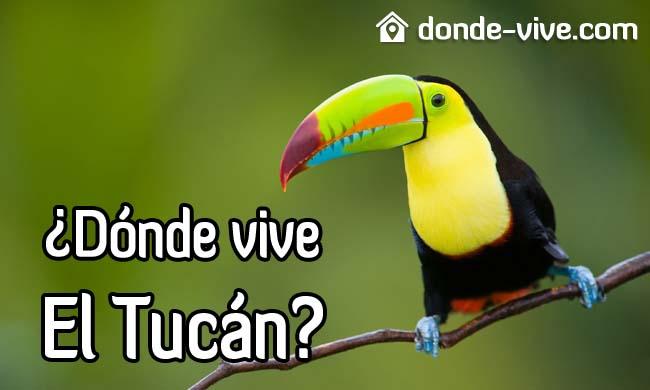 ¿Dónde vive el Tucán?