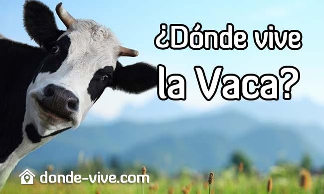 Dónde vive la Vaca