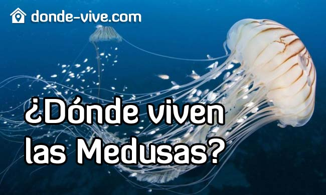 Dónde viven las medusas