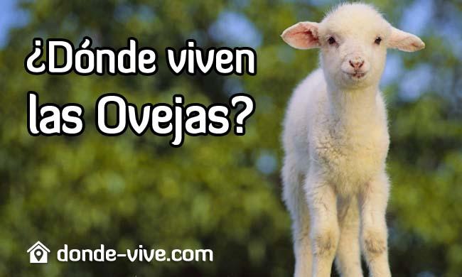 Dónde viven las ovejas