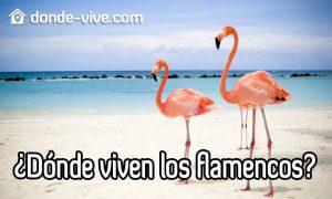Dónde viven los flamencos