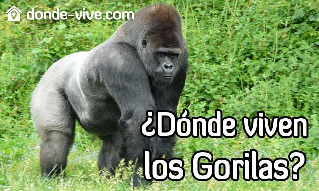 Dónde viven los gorilas