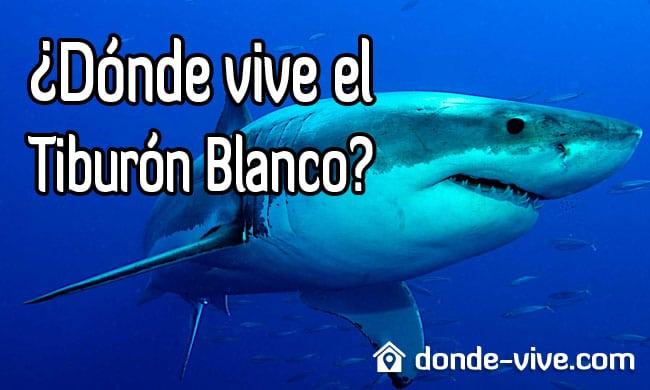 Dónde vive el tiburón blanco