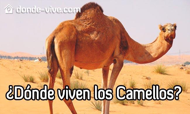 Dónde viven los camellos