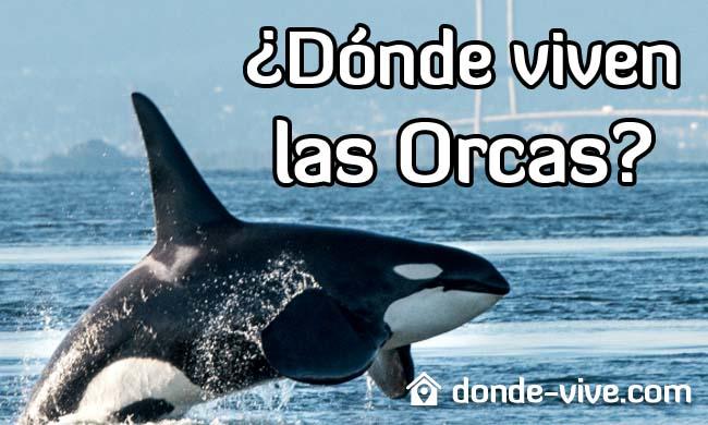 Dónde viven las orcas