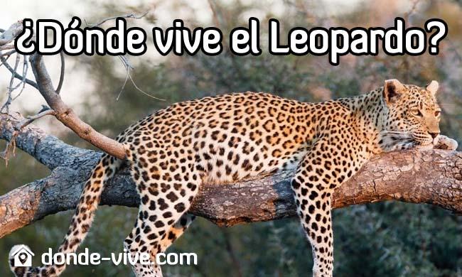 Dónde vive el Leopardo