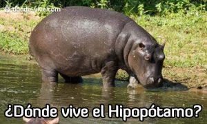 Dónde vive el Hipopótamo