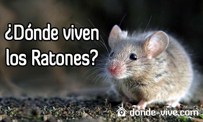 ¿Dónde viven los ratones?