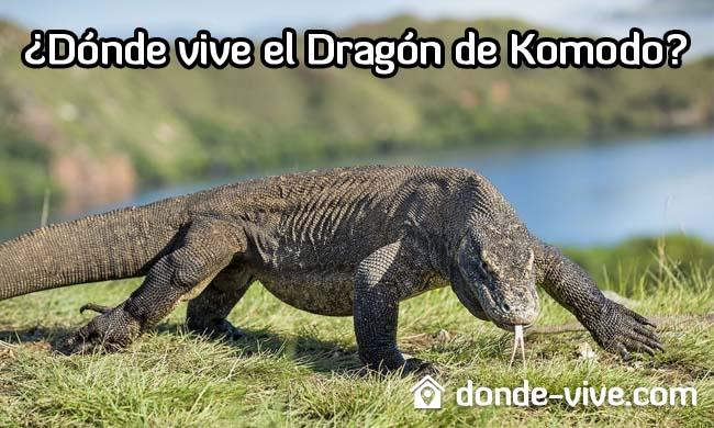 ¿Dónde vive el Dragón de Komodo?