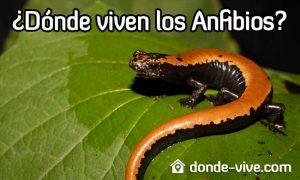 Dónde viven los anfibios