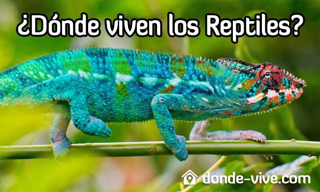 ¿Dónde viven los reptiles?