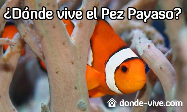 ¿Dónde vive el Pez Payaso?