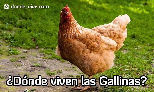Dónde viven las gallinas
