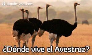 dónde vive el avestruz