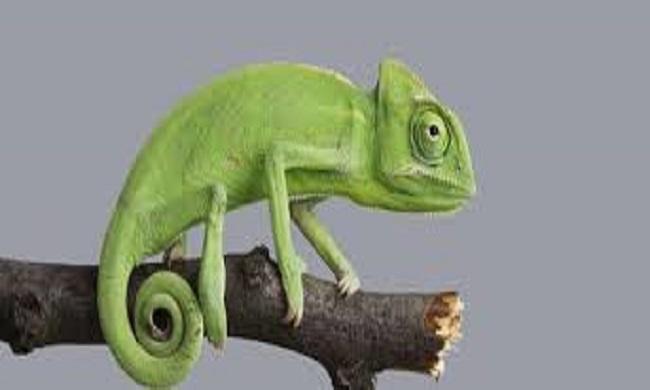 ¿Dónde vive el camaleón?